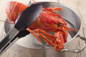 cooked lobster is taken from a pot